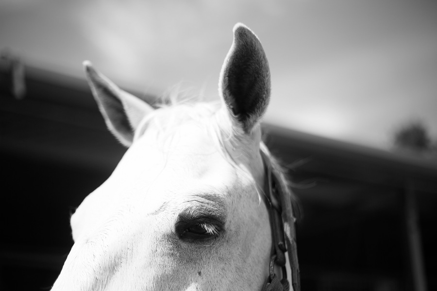 black and white pic of hose eyes