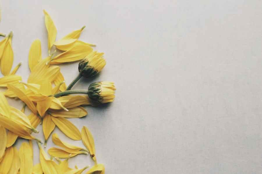 picking yellow flowers